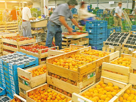 Arabische Lebensmittel Großhandel